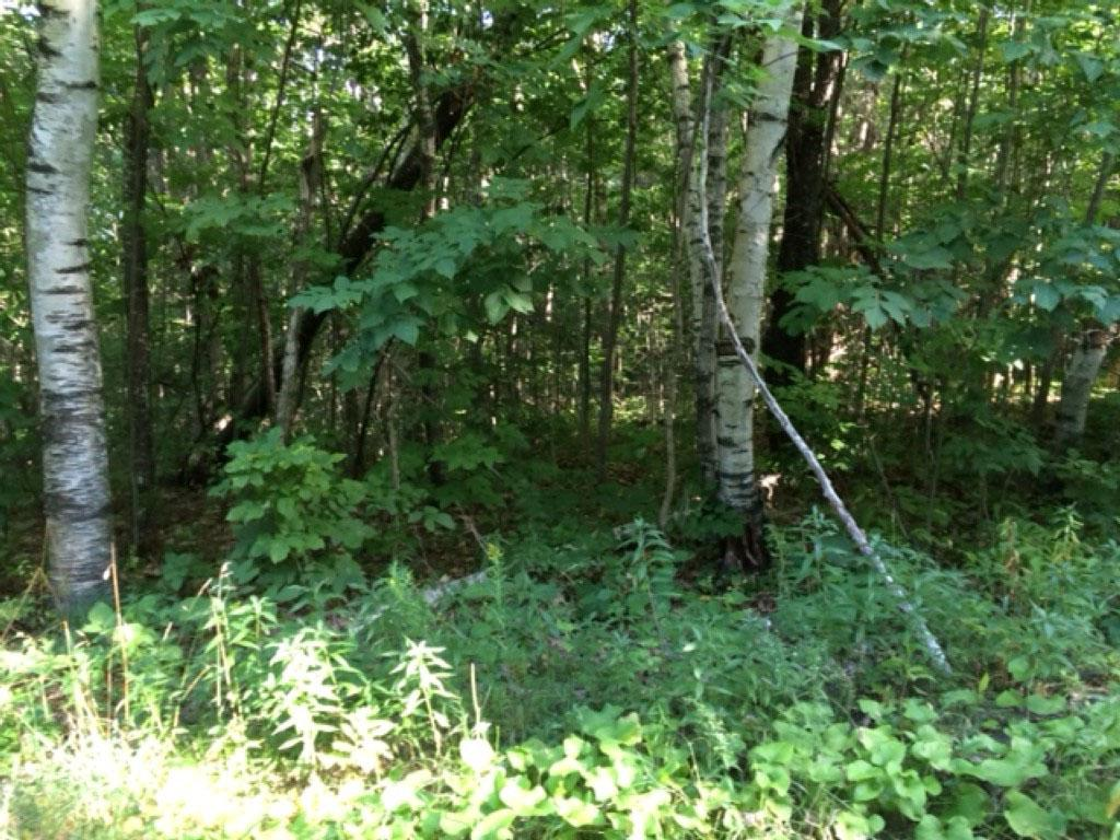 Norwich VT 05055 Land for sale $List Price is $125,000