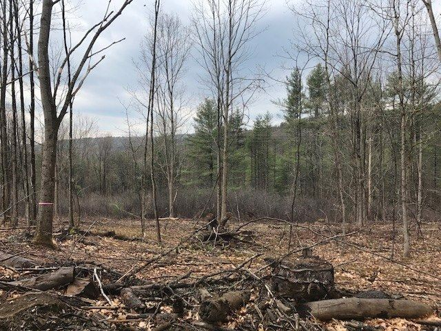 Springfield VT Land  for sale $List Price is $39,900