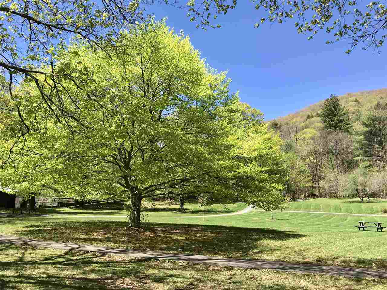 Take a picnic to Faulkner Park- just a minute walk from home 11884147