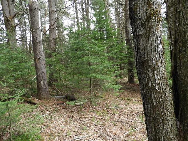 Washington NH 03280 Land for sale $List Price is $18,000
