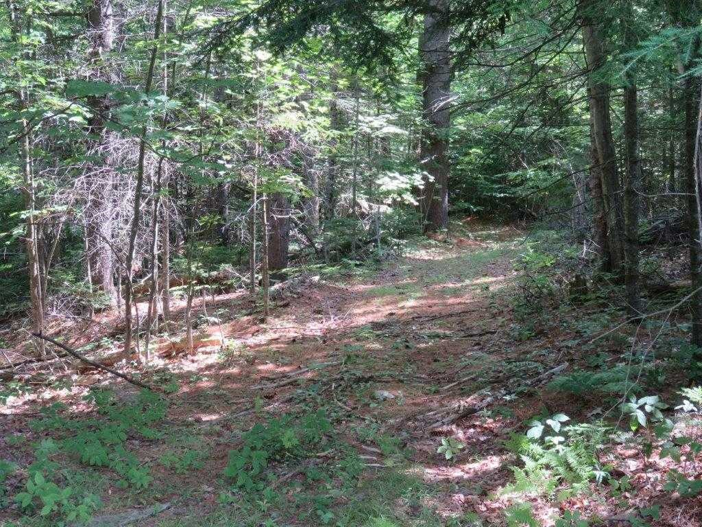Woods Road for hiking 11896147