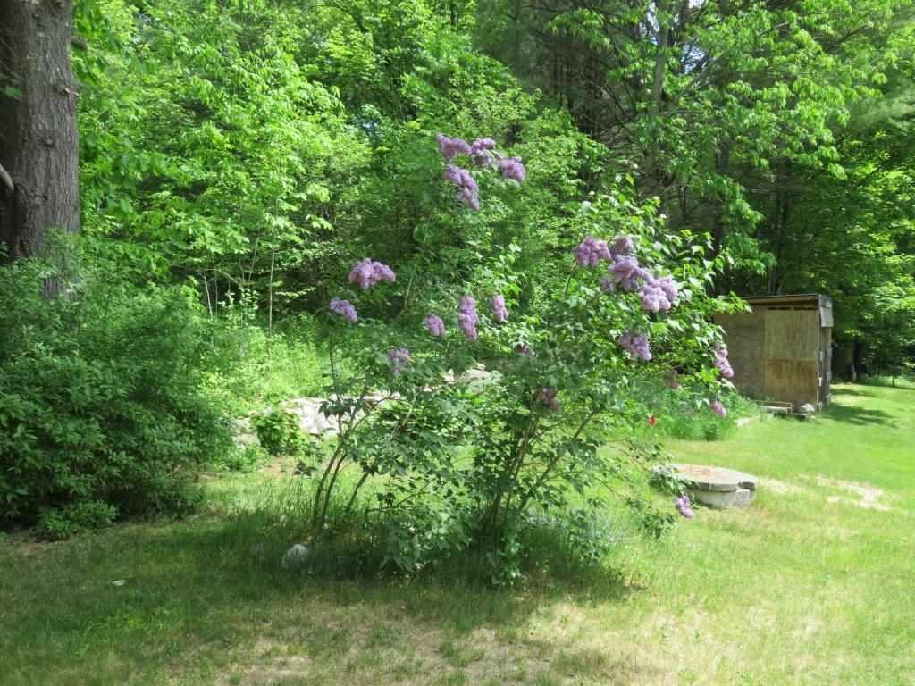 Lilacs 12054093