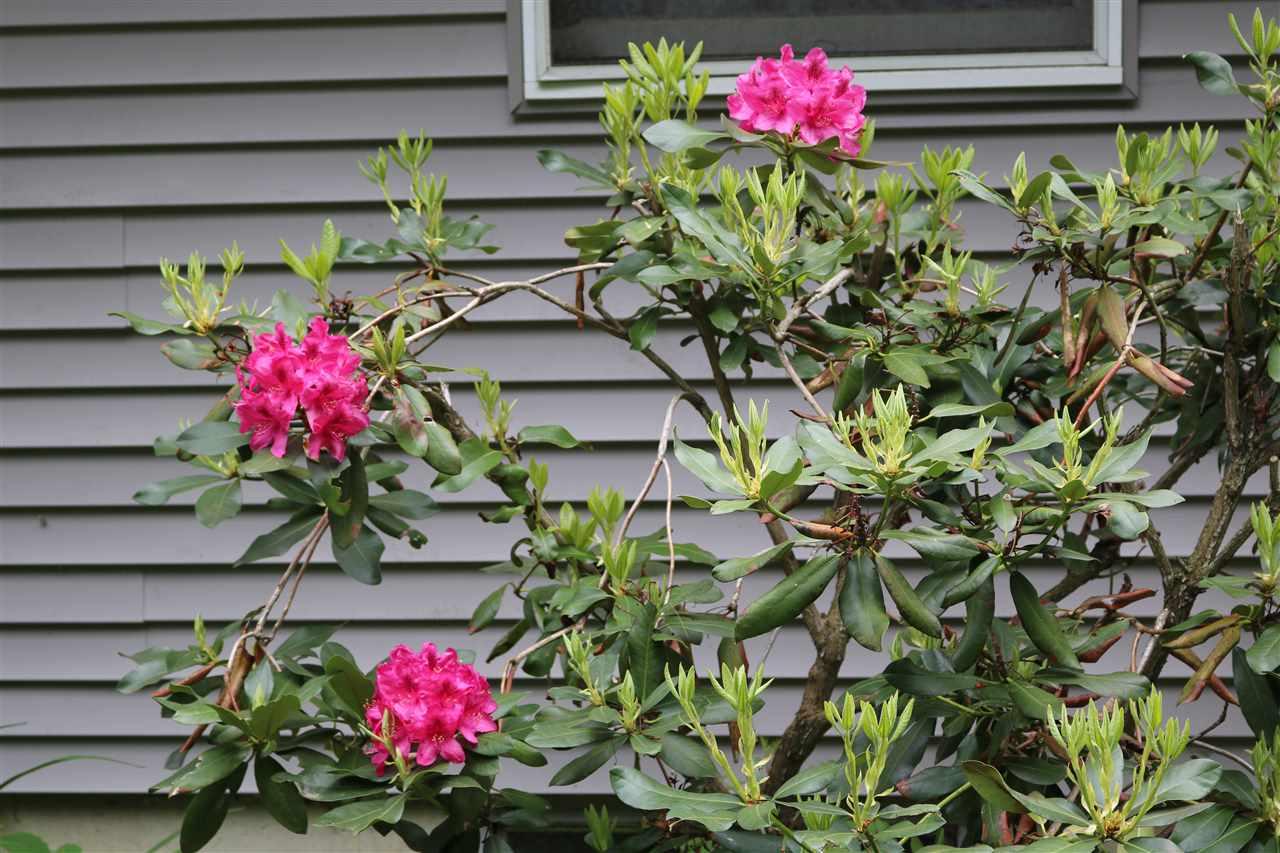 Flowering bush 12087479