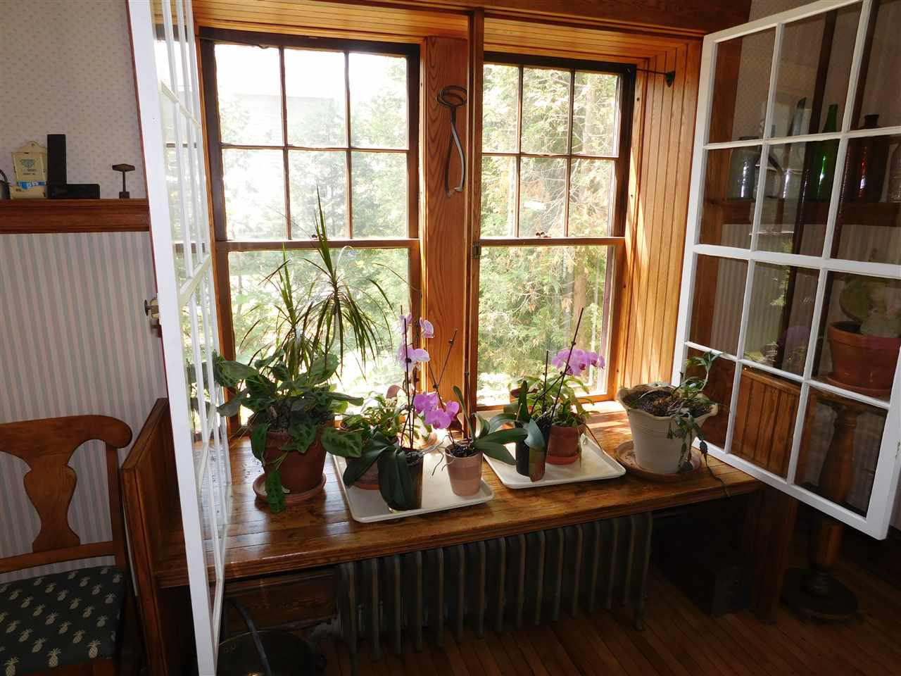 Share the Sunshine with the plants in Dining Room! 12114561