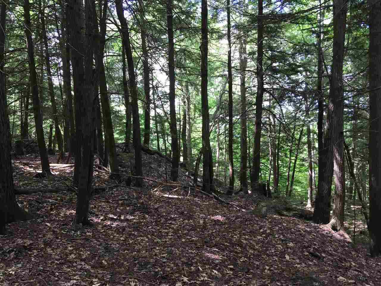 Mature Trees 12285711