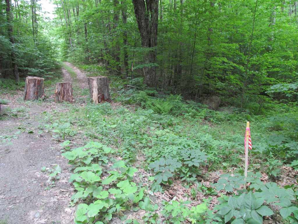 ALSTEAD NH LAND  for sale $$165,000 | 109 Acres  | Price Per Acre $0  | Total Lots 2