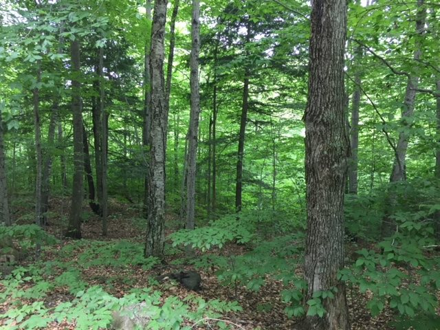 HEBRON NH LAND  for sale $$199,000 | 11.69 Acres  | Price Per Acre $0  | Total Lots 2