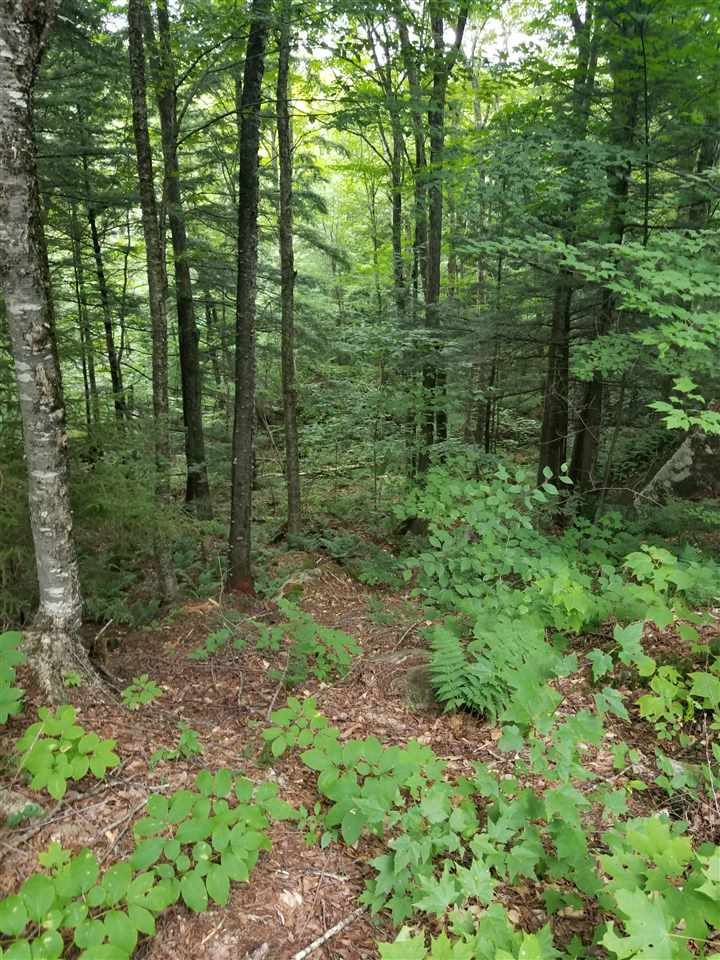 SANDWICH NH Land / Acres for sale
