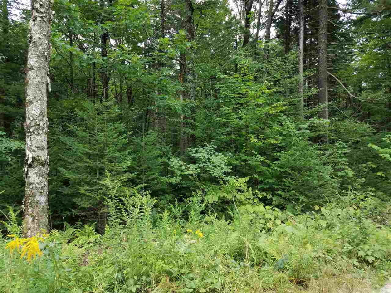 Washington NH 03280 Land for sale $List Price is $11,200