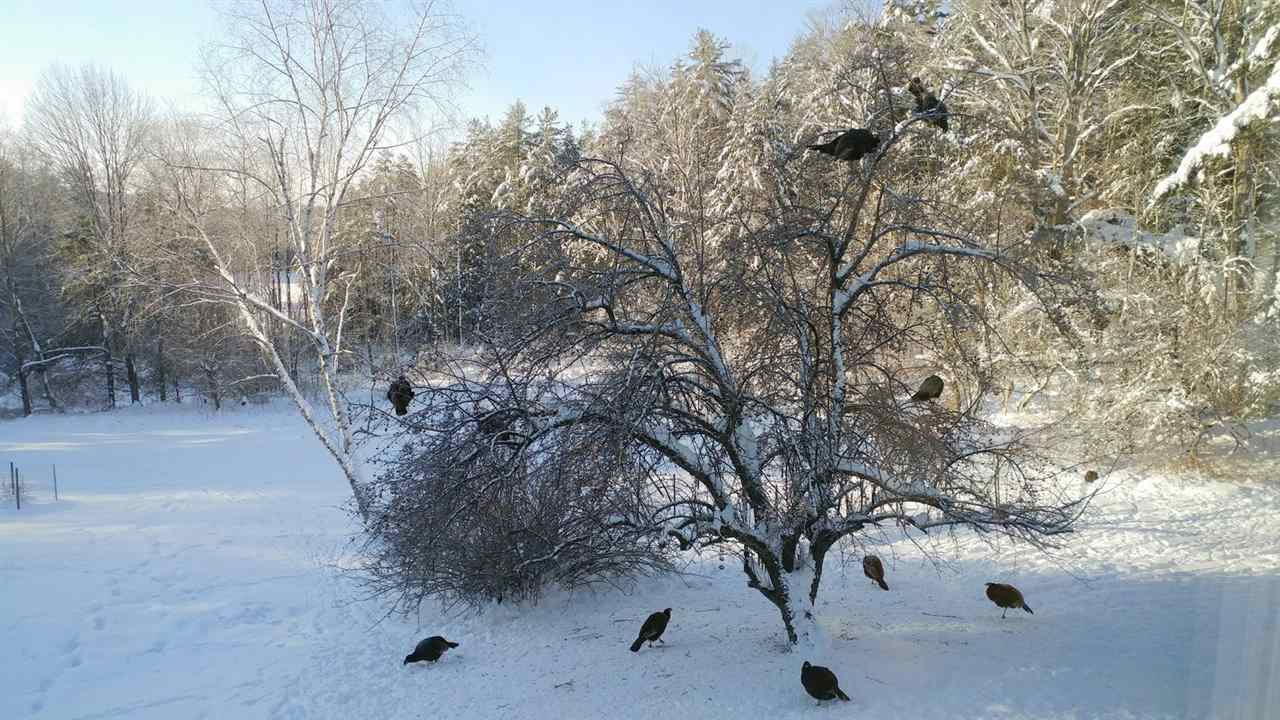 Abundant Wildlife