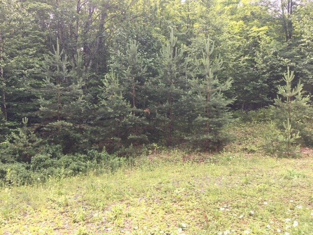 Hartland VT 05048 Land for sale $List Price is $39,900