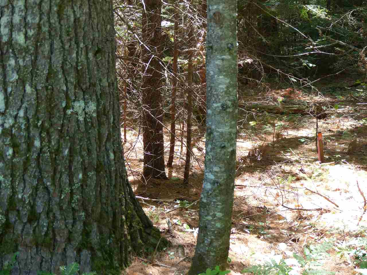 VILLAGE OF NORTH SANDWICH IN TOWN OF SANDWICH NH Land / Acres for sale