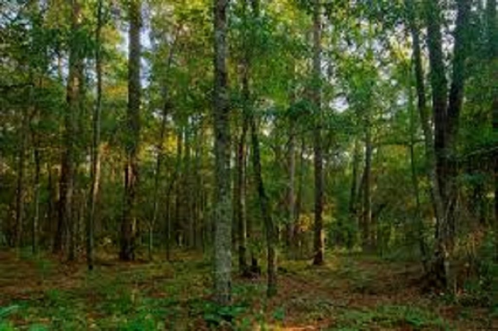 NEW LONDON NHLAND  for sale $$100,000 | 2.5 Acres  | Price Per Acre $0  | Total Lots 3