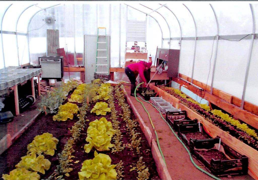 Greenhouse in operation