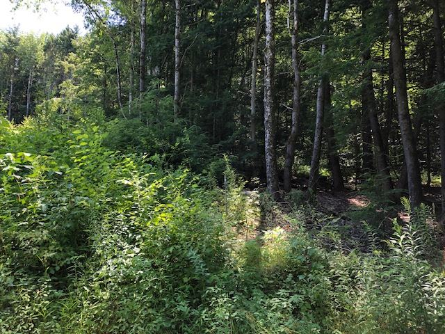 Weathersfield VT 05030Land for sale $List Price is $68,900