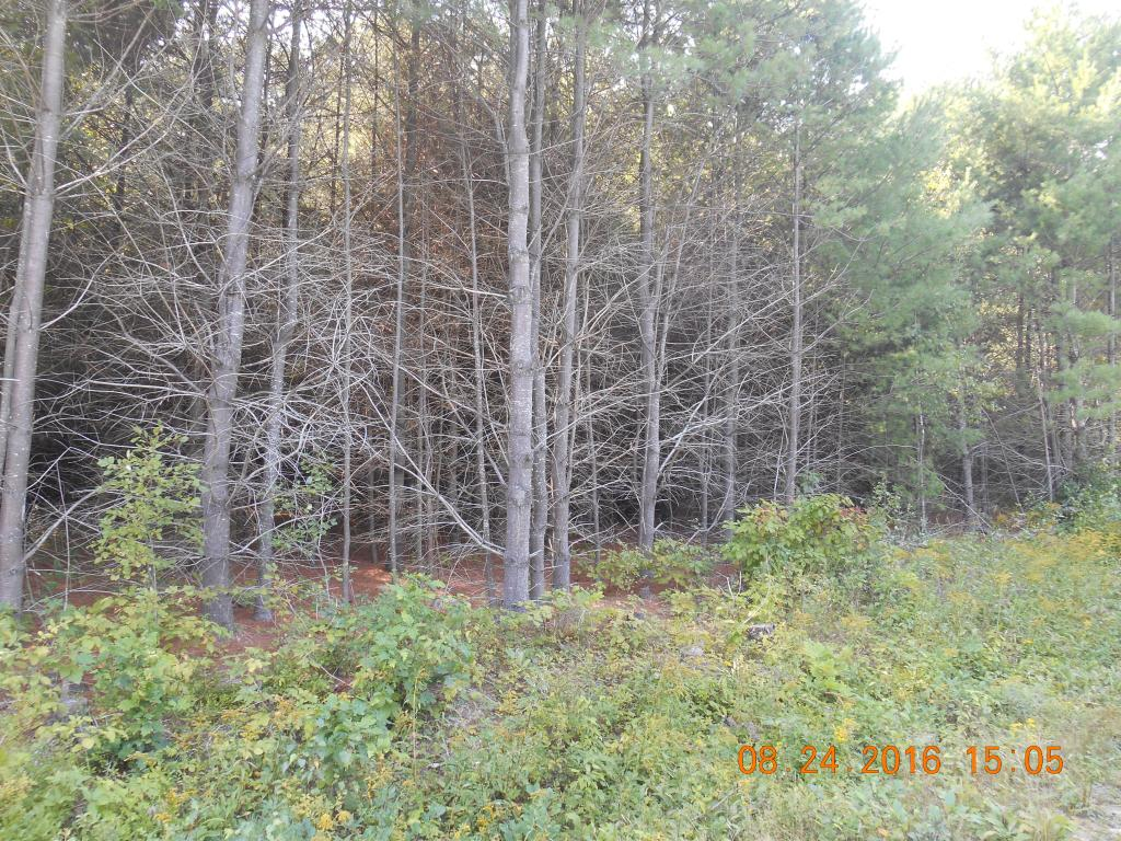 Unity NH 03773 Land for sale $List Price is $33,500