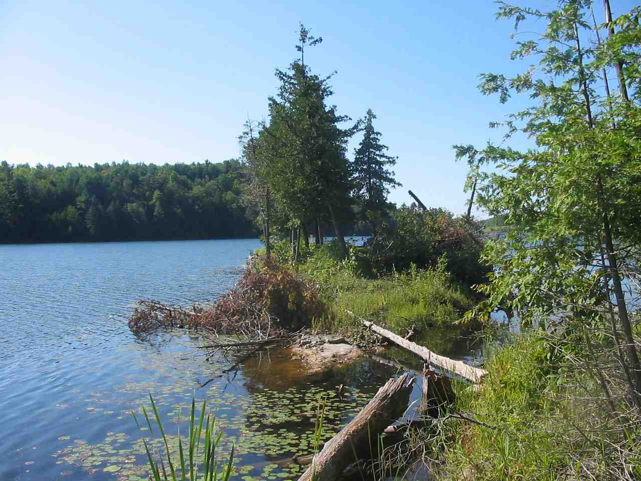 With 1,963 feet of Long Pond frontage and 1,897 feet of road frontage, there are so many possibilities for this land. Beautiful wooded acres with both young and older growth. Beach area and small seasonal island. Septic site plan and survey available. Tests support 6 four-bedroom homes and 2 three-bedroom homes with more area to still be tested. Established roadway makes it easy to hike and see the property and goes directly to the pond. $40k +/- in timber sited. Could use acreage in forestry program to offset taxes.