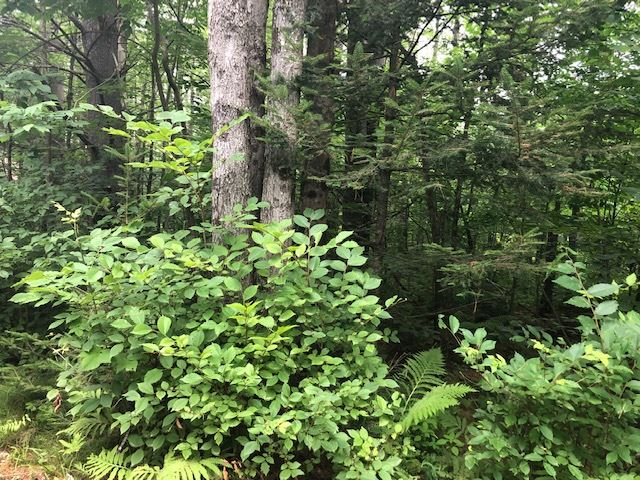 ORFORD NH LAND  for sale $$22,500 | 1 Acres  | Price Per Acre $0