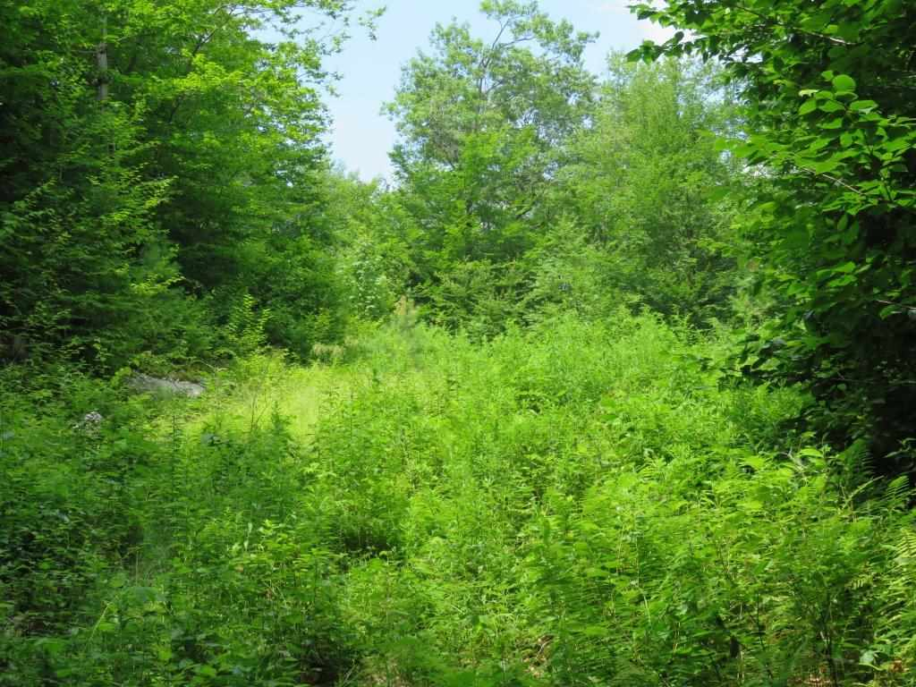 GRAFTON NH LAND  for sale $$89,000 | 32.5 Acres  | Price Per Acre $0  | Total Lots 2