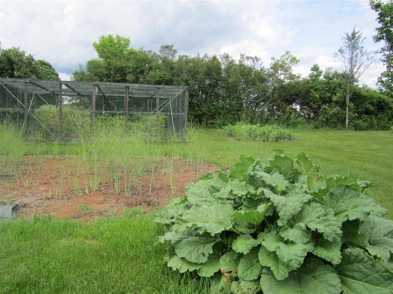 Rhubard, Asparagus, Blueberries