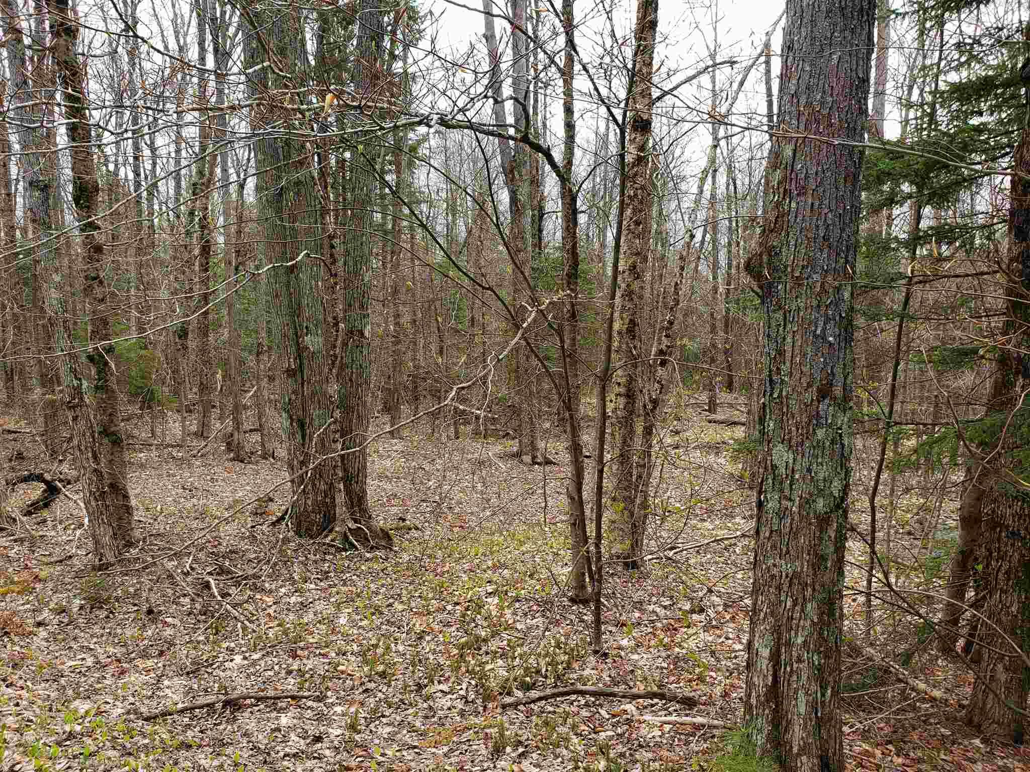 Lempster NH 03605Land for sale $List Price is $18,500