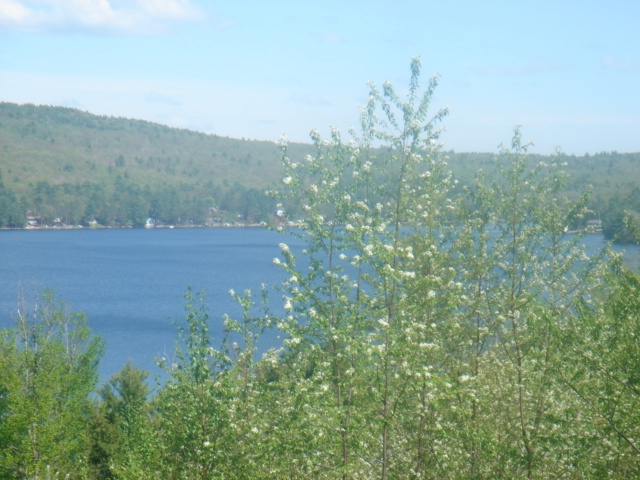 NEW DURHAM NH LAND  for sale $100,000