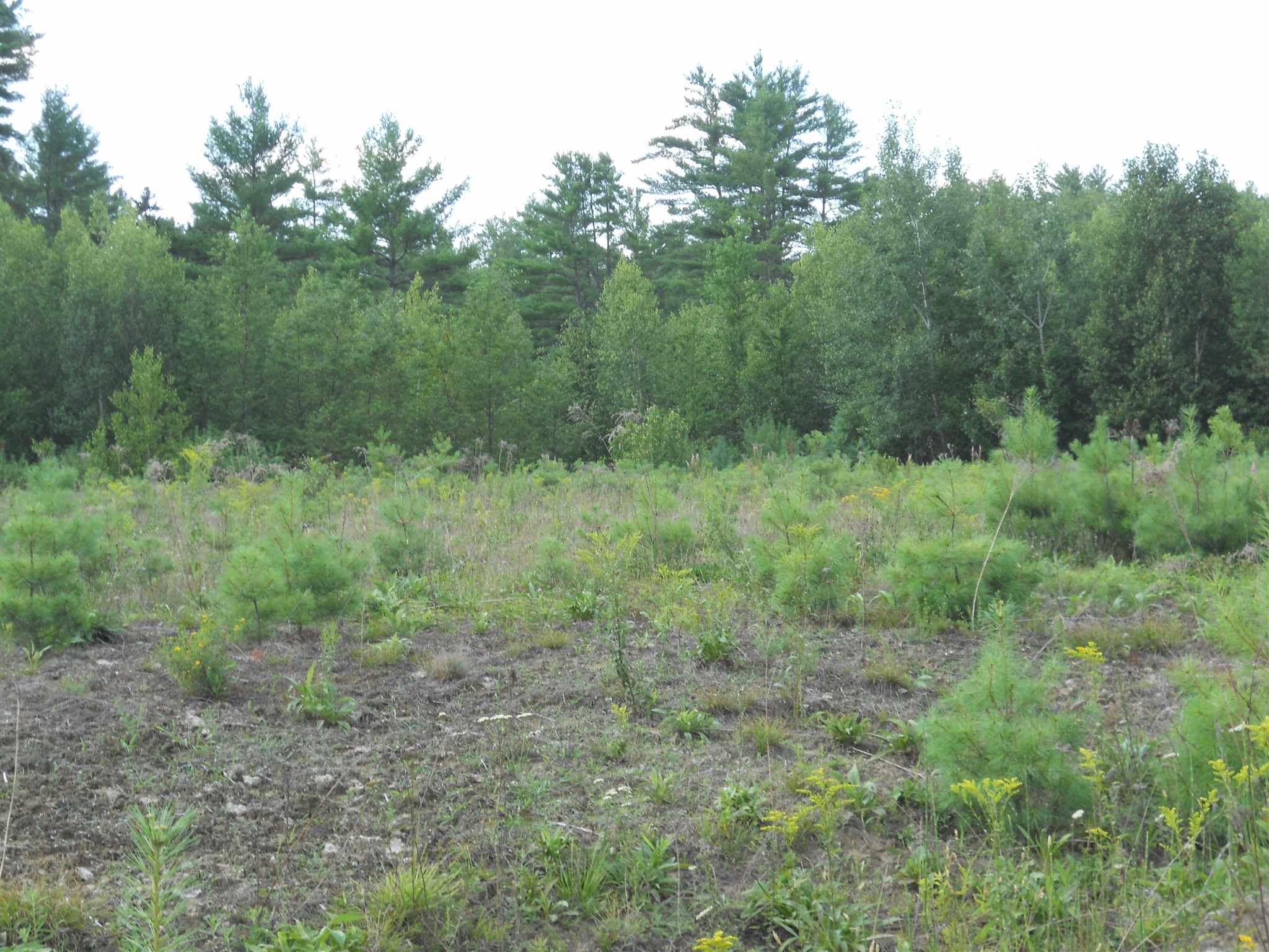 Newport NH 03773 Land for sale $List Price is $29,900