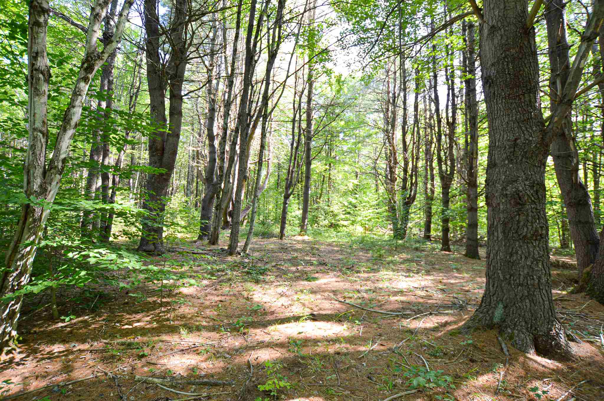 Weathersfield VT 05030Land for sale $List Price is $99,000