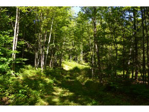 Plainfield NH 03781 Land for sale $List Price is $131,733
