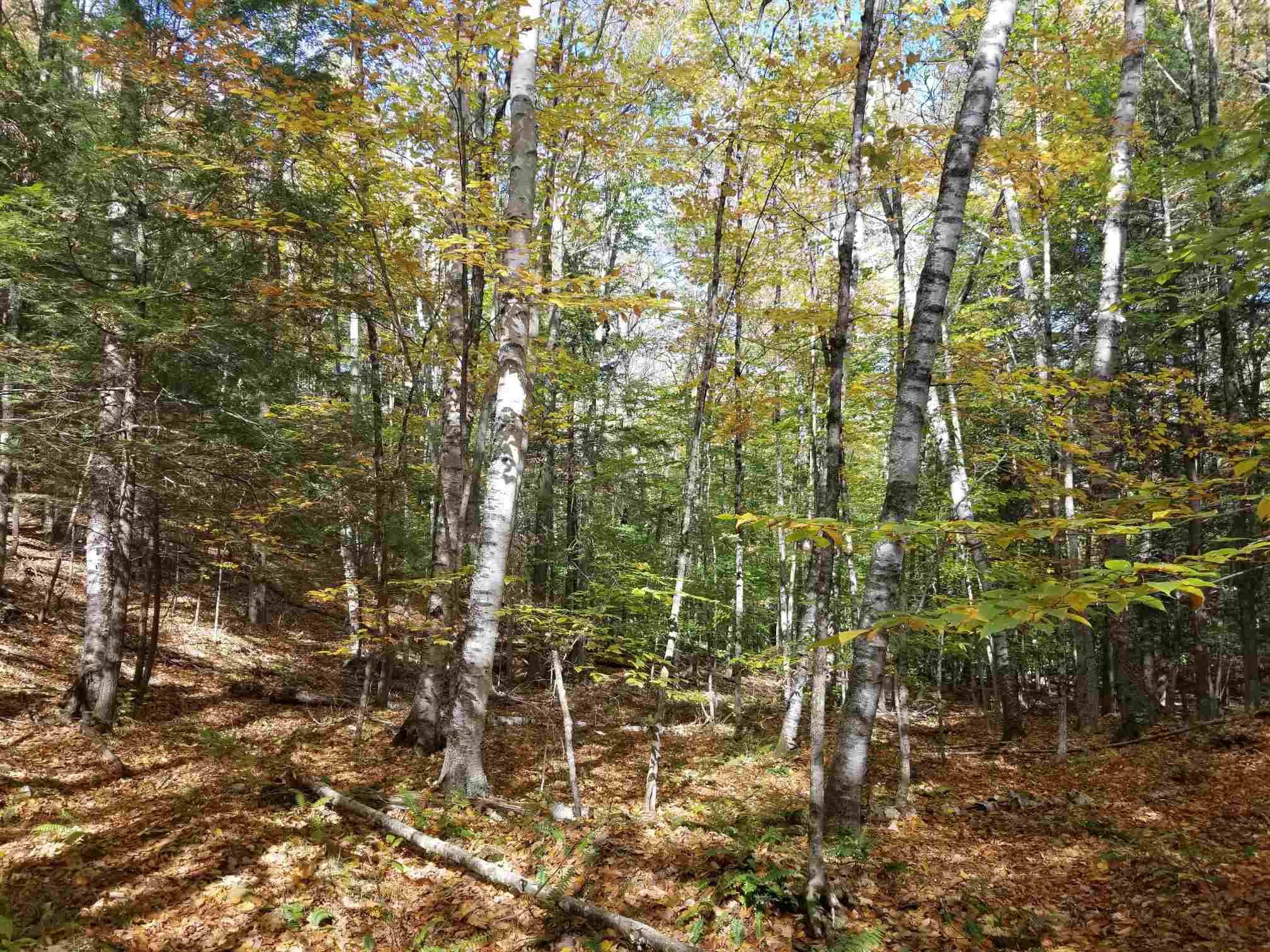 Norwich VT 05055Land for sale $List Price is $299,900