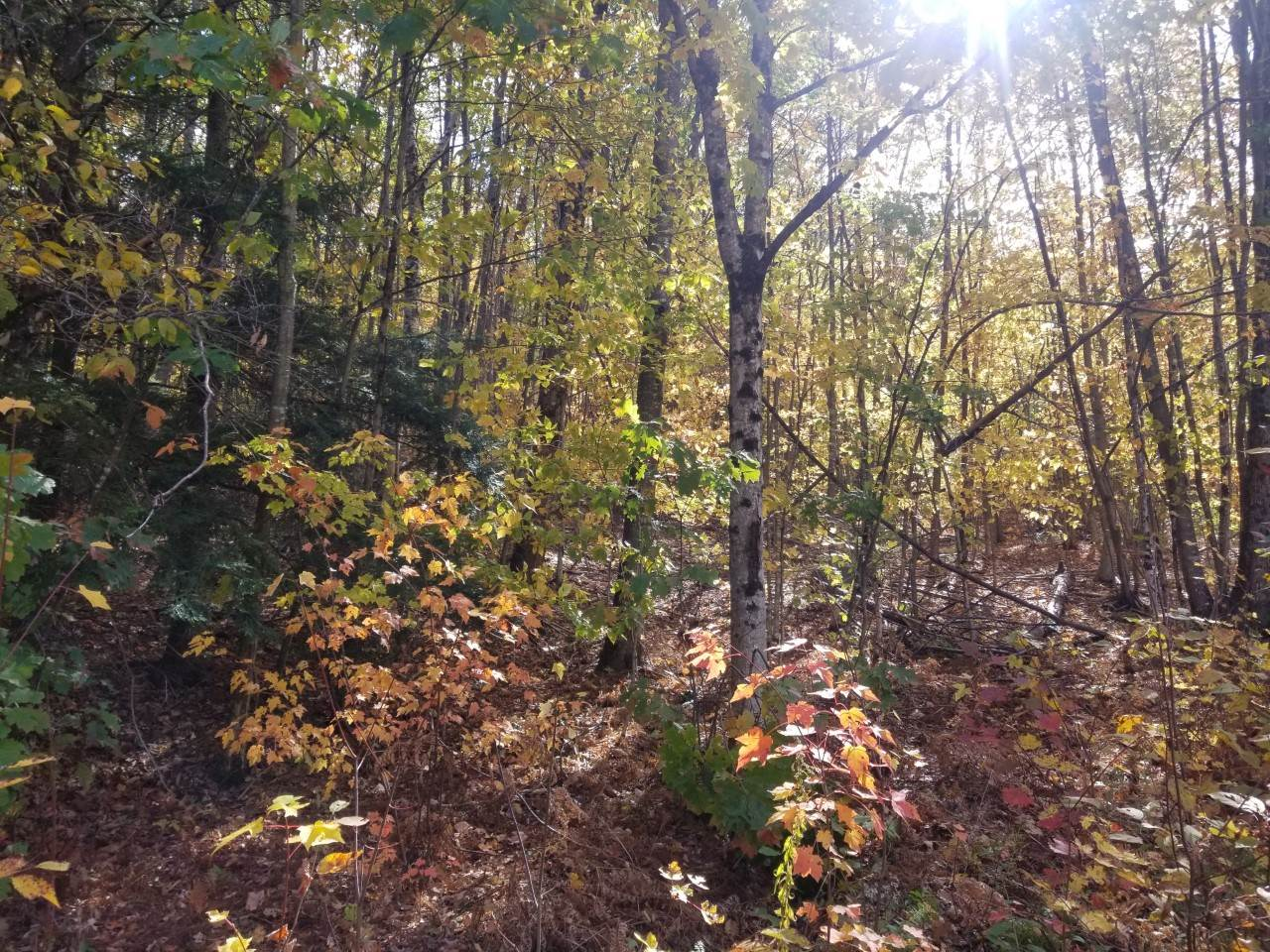 Lempster NH 03605Land for sale $List Price is $12,900