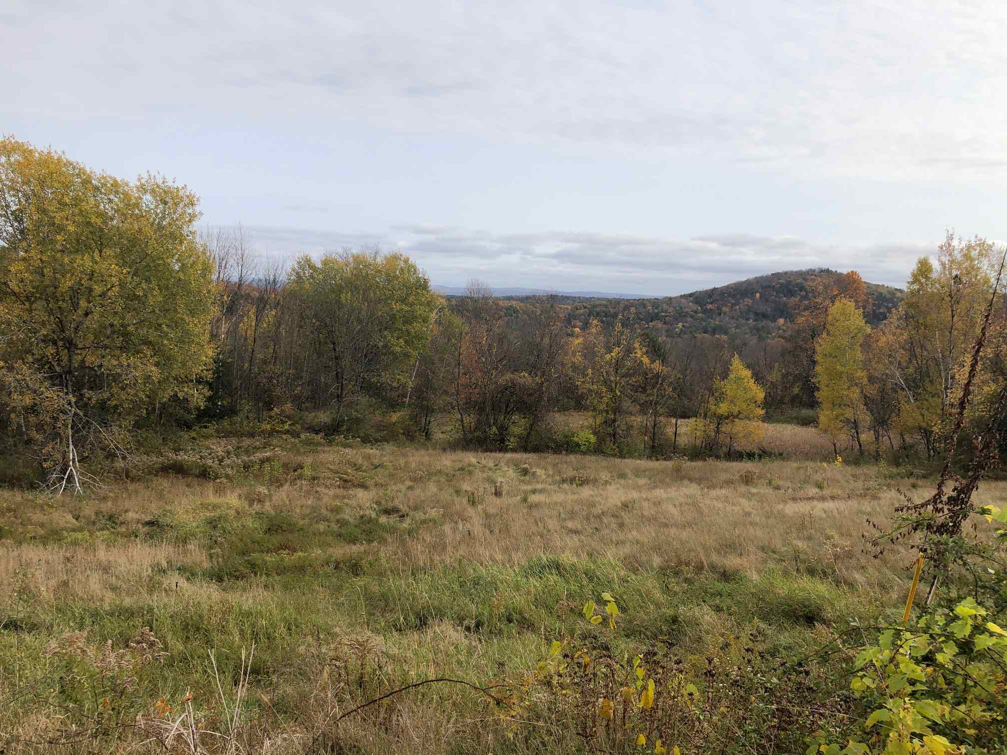image of Springfield VT Land   48.94 Acres