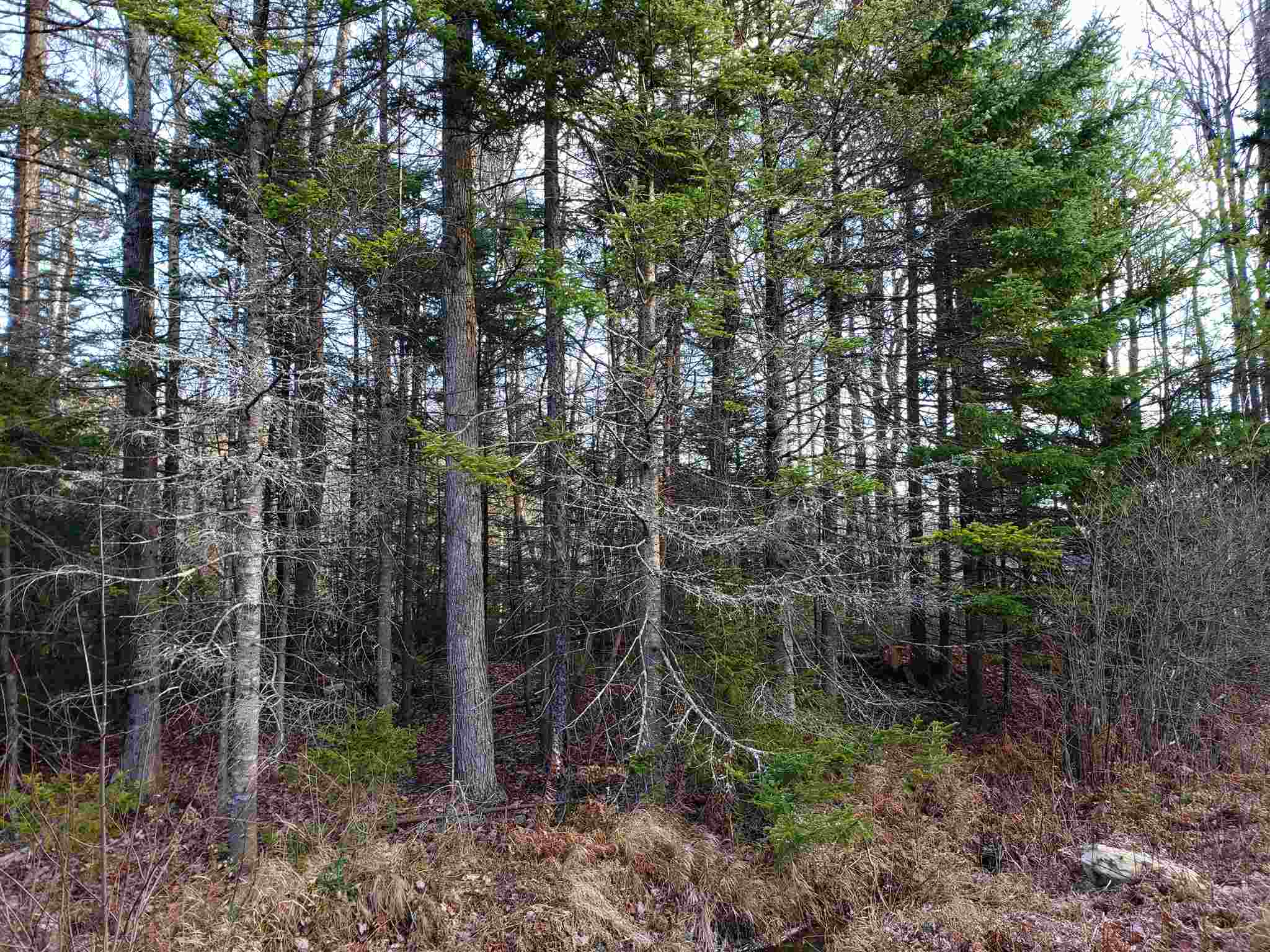Washington NH 03280 Land for sale $List Price is $32,500
