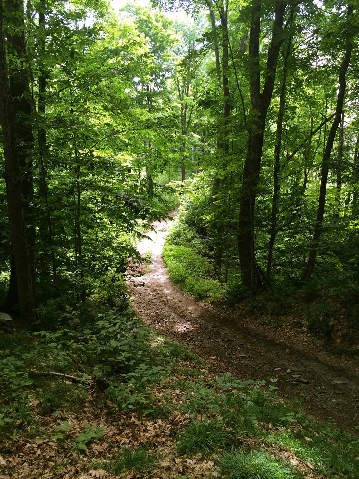 Norwich VT 05055Land for sale $List Price is $425,000